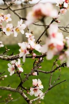Украшение веток цветами на природе