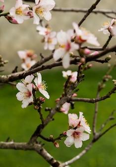 Красивые белые цветы на дереве