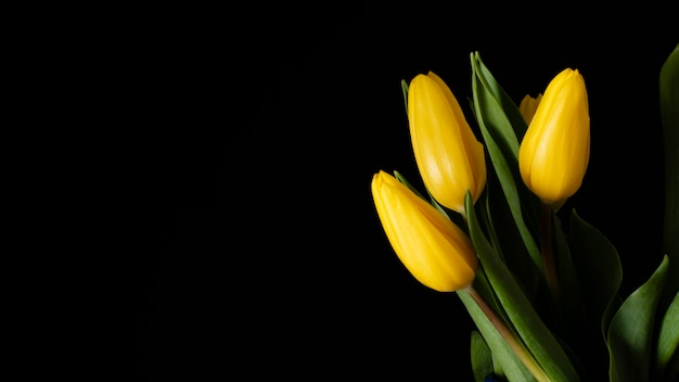 コピースペースの黄色いチューリップ