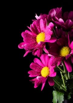 Макро цветут весенние цветы