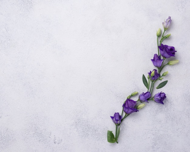 Вид сверху цветущие цветы на столе