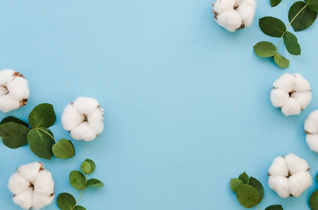 青の背景にトップビュー綿花