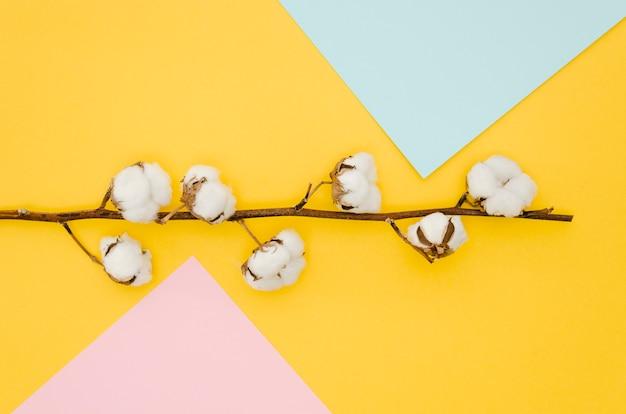Вид сверху хлопковые цветы на цветном фоне