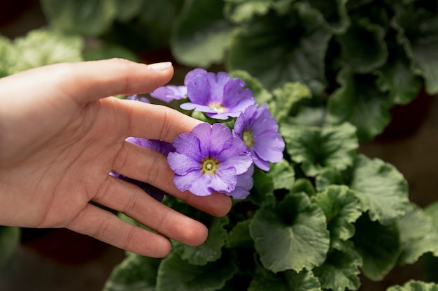 Крупным планом женщина, касаясь фиолетовый цветок