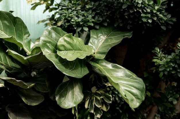 美しい緑の植物との配置