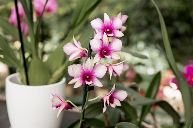 市場で美しい花とアレンジメント