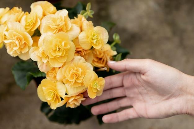 黄色の花に触れるクローズアップ女性