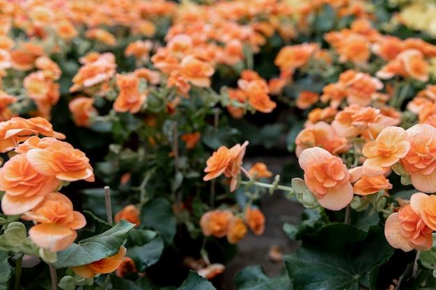 美しいオレンジ色の花のアレンジメント