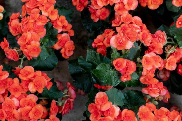 色とりどりの花の市場コンセプト