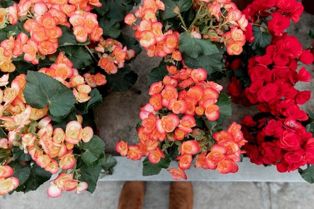 屋内で色とりどりの花でトップビューアレンジ