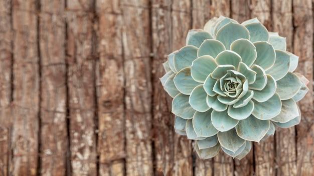 Вид сверху цветок на деревянном фоне