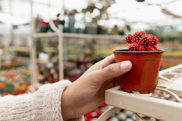 Рука крупным планом держит горшок с кактусом