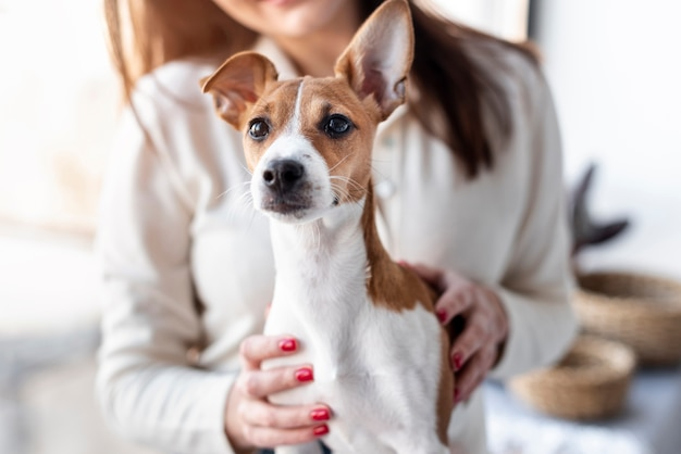 Милая собака позирует сидя на коленях у владельца