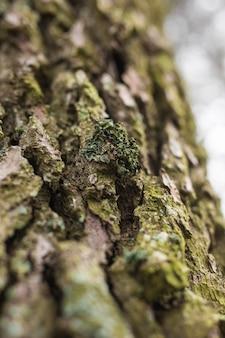 クローズアップの古い木の樹皮