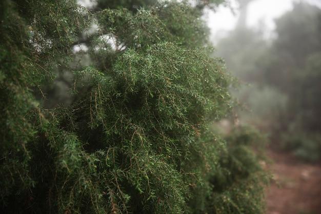 自然の中で美しい木
