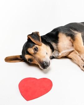 Портрет милая маленькая собака расслабляющий