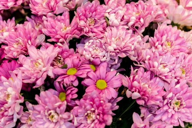 Ассортимент красивых весенних цветов крупным планом