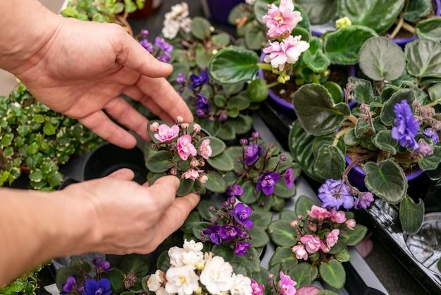 Руки крупным планом расставляют растения