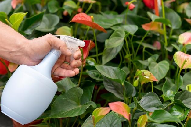 水のボトルをクローズアップスプレー植物