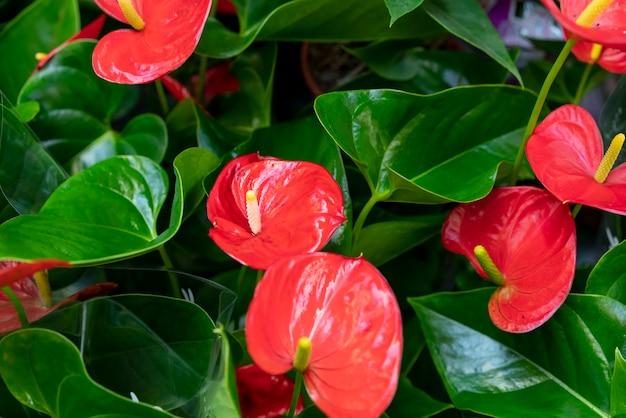 Крупный план красивых и элегантных цветов