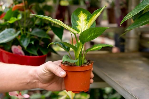 Рука крупным планом держит элегантное растение