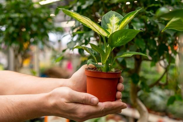 Макро руки держат комнатное растение