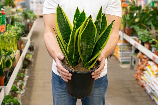 エレガントな観葉植物を保持している正面図男