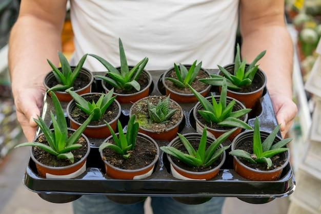 Крупным планом мужчина держит коллекцию комнатных растений