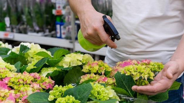 Крупным планом человек опрыскивает коллекцию растений водой