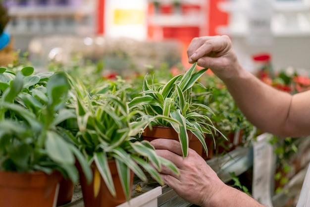 エレガントな観葉植物のクローズアップの品揃え