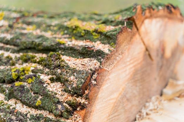キャンプファイヤーのクローズアップ木材
