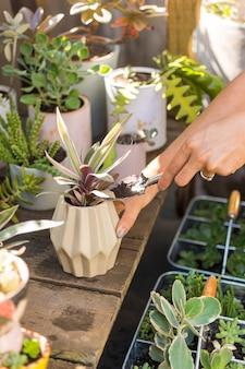 自宅で彼女の植物の世話をする女性