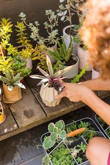 彼女の植物の世話をするハイアングルの女性