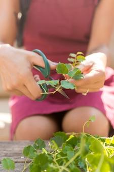 Молодая женщина срезает части растения