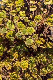 Вид сверху зеленого растения в земле