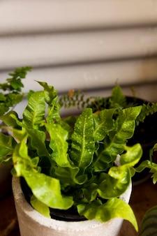 鍋にハイアングルの緑の植物