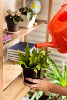 Молодая женщина поливает растения