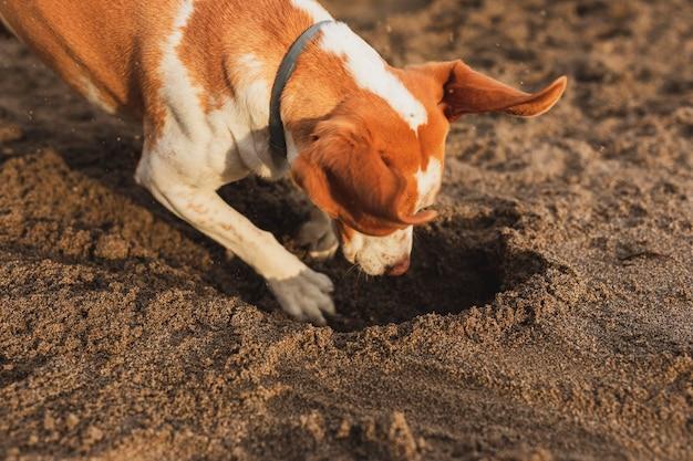 海辺でハイアングル犬