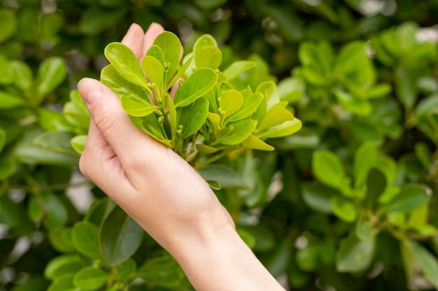 Крупным планом женщина, держащая листья в руке