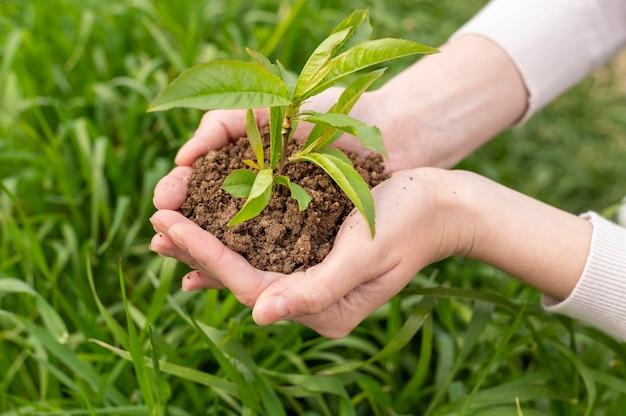 植物が付いている土を手で保持しているハイアングルの女性