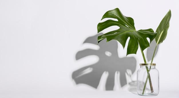 Ботаническая концепция вид спереди с копией пространства