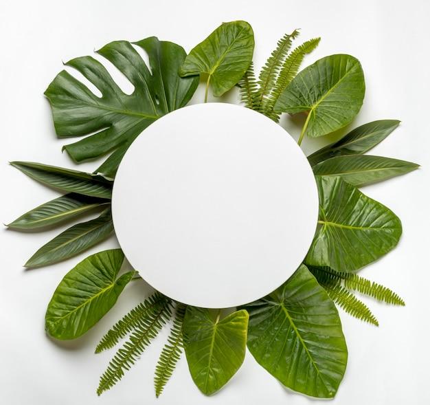 緑の葉の概念のトップビューコレクション