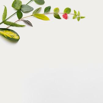 Вид сверху ботанические листья с копией пространства