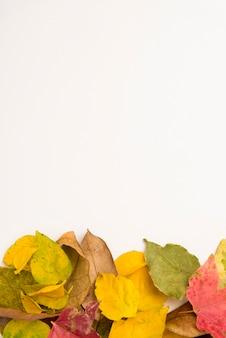 Вид сверху коллекция осенних листьев концепции