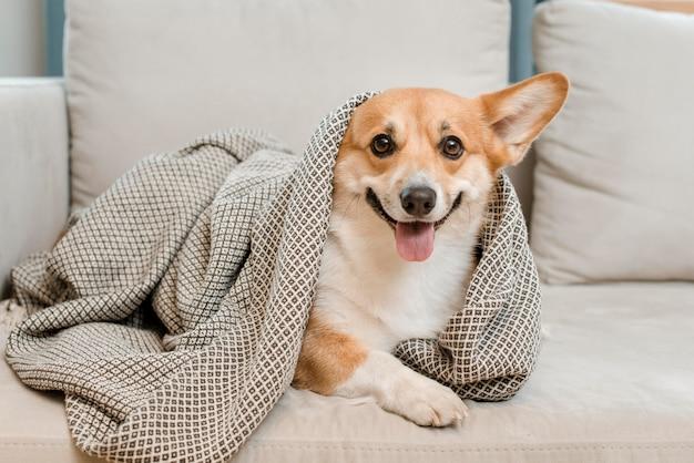 ソファの毛布の下の愛らしいおもちゃ