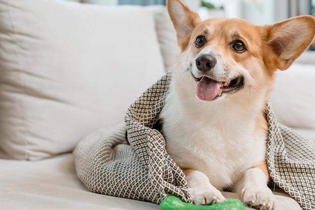 おもちゃとソファの上の毛布の中の犬