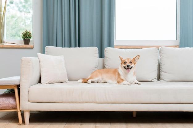 Собака на диване у себя дома