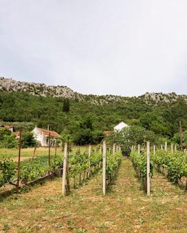 Концепция сельского хозяйства с виноградником