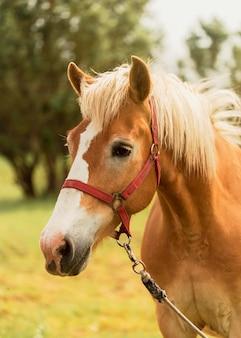 屋外の美しい茶色の馬