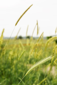 自然な緑の草のぼやけたデザイン